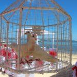 Linaw Beach Resort Panglao Island Bohol Weddings 038